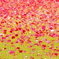 Photos: お花畑