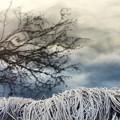 Photos: 冬の景