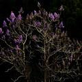 Photos: 山間に咲く2