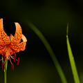 Photos: 夏に咲く