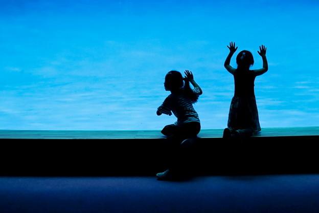 Photos: 青の空間