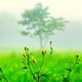 Photos: 高原の朝