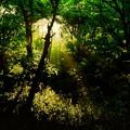 Photos: 森林の光