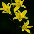 Photos: 高原の花