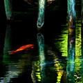 Photos: 赤い鯉