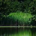 緑のある場所
