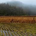Photos: 山間の田園