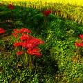 Photos: 秋に咲く