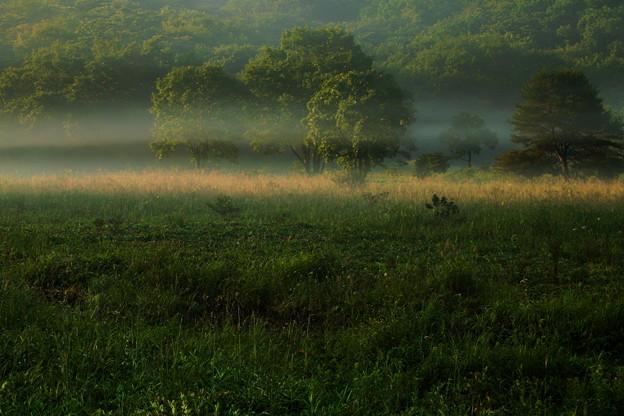 朝霧流れる
