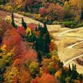 Photos: 秋の道