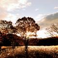 Photos: 朝の高原