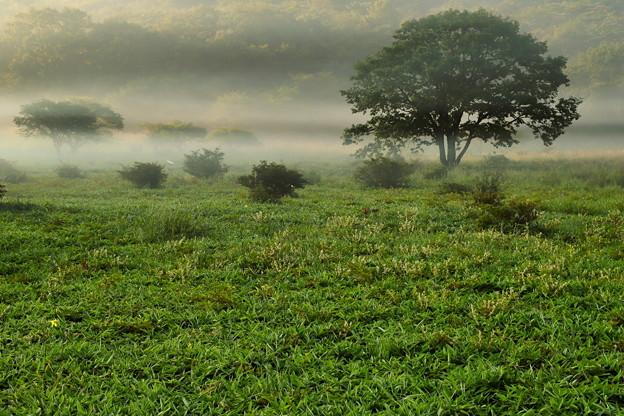 Photos: 霧流れる