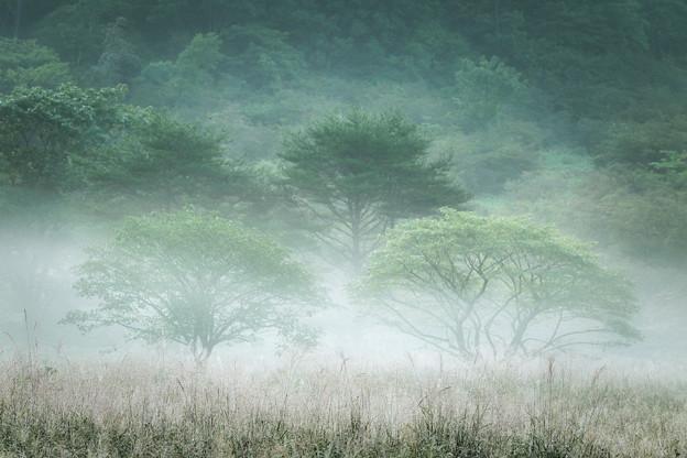 Photos: 霧纏う