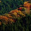 Photos: 彩る木々