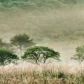 早朝の夏霧