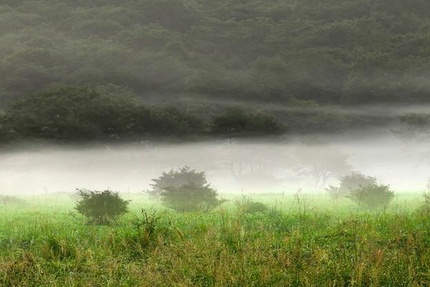 高原の朝霧