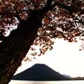 湖畔の樹木