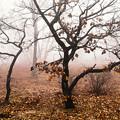 Photos: 晩秋の霧