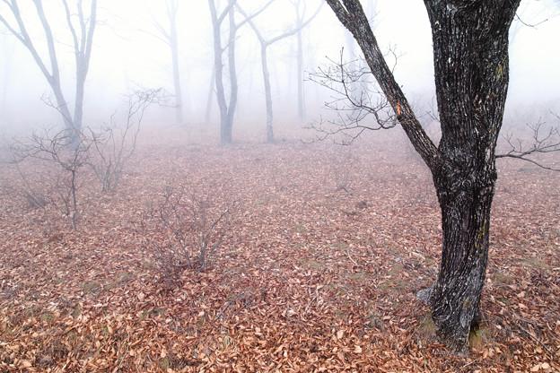 Photos: 霧の日