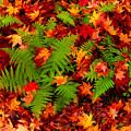 Photos: 秋の緑葉