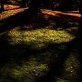 晩秋の光1