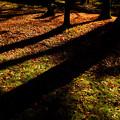 晩秋の光2