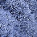 尾根の雪景色