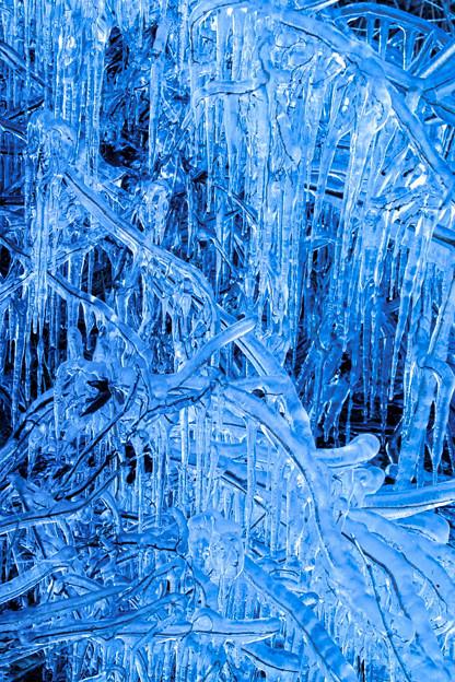 Photos: 枝凍る