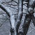 Photos: 冬の木立