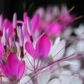 花束をあなたに アルトサックスで 絵夢島 自宅庭に咲いていた花々