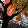 枯れ葉 4k画質 ソプラノサックスで 絵夢島/PIXTA 高知城