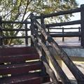 Photos: 「ダニーボーイ」ハーモニカで 三郷公園 絵夢島/PIXTA