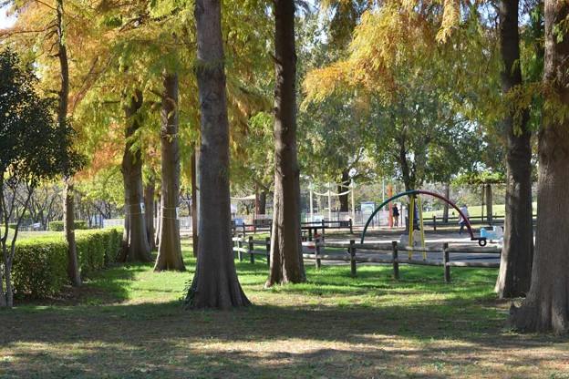 「ある日突然」トア・エ・モア アルトサックスで 三郷公園 絵夢島/PIXTA