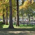 Photos: 「ある日突然」トア・エ・モア アルトサックスで 三郷公園 絵夢島/PIXTA