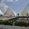 Photos: 「Sailing」ロッド・スチュワート ハーモニカで 絵夢島/PIXTA