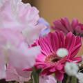 Photos: 「Careless Whisper 」ソプラノサックスで 季節の花々 絵夢島/PIXTA