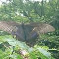 釣り場に居た 蝶