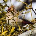 Photos: 近所の渡り鳥