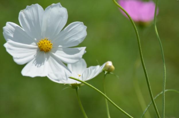 白花に影がさす。