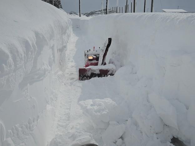 大雪の後始末