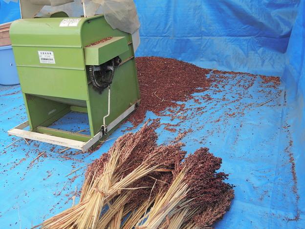 タカキビの脱穀作業
