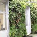 新山口駅南北自由通路 垂直庭園