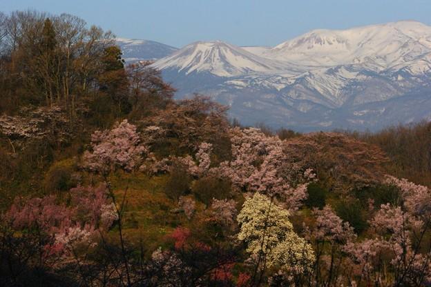吾妻小富士と花見山