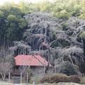 ????: 雪降る雪村庵