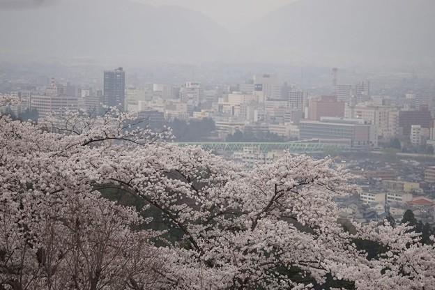 桜と福島市内遠景