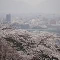 Photos: 桜と福島市内遠景