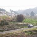 写真: 花見山にて