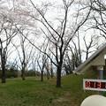 写真: 桜の木の下のモニタリングポスト