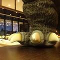 写真: ゴジラの足と爪