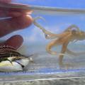 タコとムラサメモンガラ